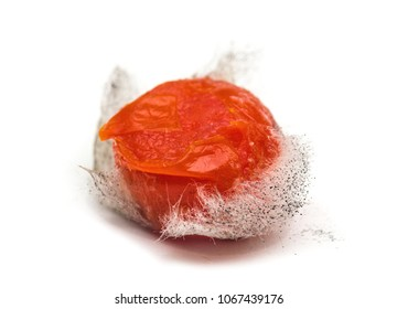 Rotten tomato with colonies of mold fungi isolated on white background