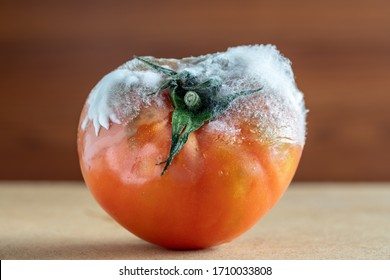 Rotten tomato with mold and fungi closeup on a dark background.