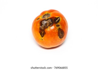 Tomato Disease Stock Images Royalty Free Images Vectors Shutterstock
