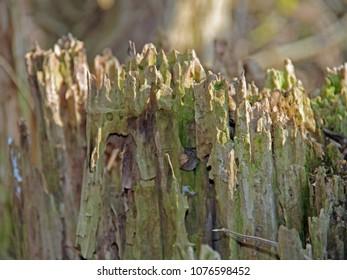 rotten wood in detail