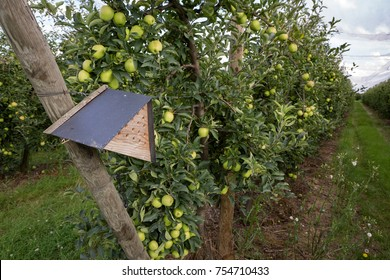 ROTTERDAM, THE NETHERLANDS - SEPT. 23, 2017: A mason bee house in an organic Apple orchard to stimulate pollination.