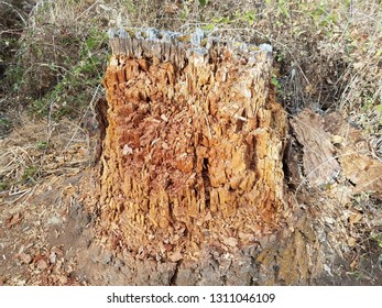 rotting or decomposing brown tree trunk or bark