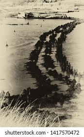 Rotting groynes in a snaking line in the water by the footpath along the Ore Estuary, Suffolk, East Anglia, UK. Grainy antique vintage sepia effect.