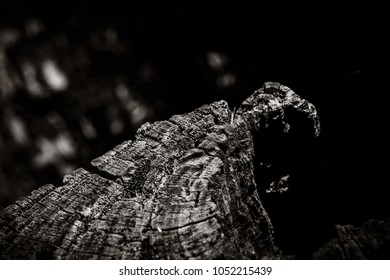 Rotting tree stump, black and white