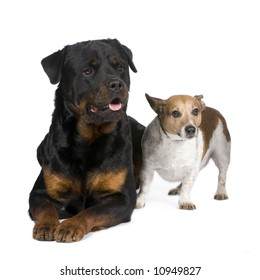 rottweiler (3 years) and a jack russel in front of a white background