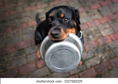 rottweiler dog holding a pet food bowl in mouth