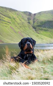Rottweiler lying down in front of a lake and mountains