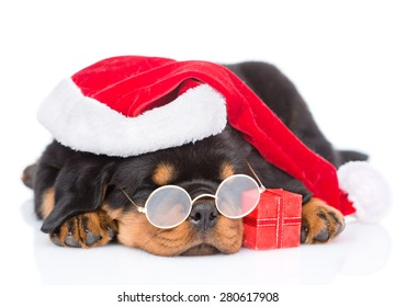 6968f78d39a2 Rottweiler puppy with glasses