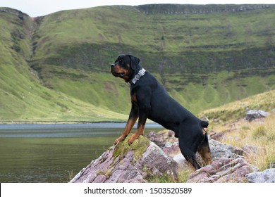 Rottweiler standing on a rock infant of a lake and mountain background.