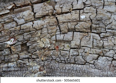 Rough bark texture and background