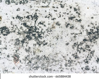 Rough concrete dirty fungus or mold texture background