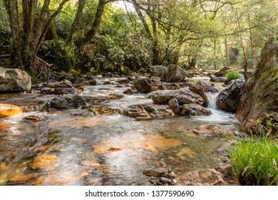 rough mountain river with white foam flows among the rocks and trees
