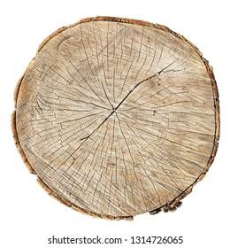 rough oak circle cut isolated on white background