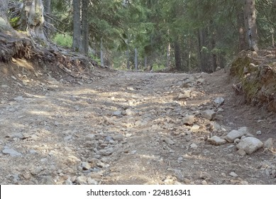 Rough road in forest