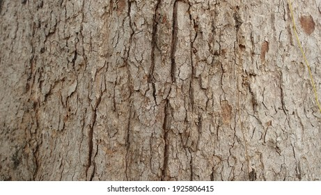 The rough surface background of poplar bark.