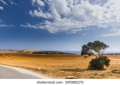 Rough terrain and a tree near cape grecco in ayia napa, cyprus