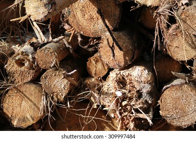 Rough Wood Pile