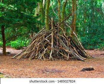 A rough wooden structure made of twigs and branches serves as a woodland den in a forest clearing