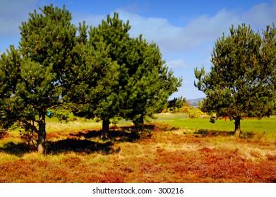 Roughland, carnoustie golf course, scotland
