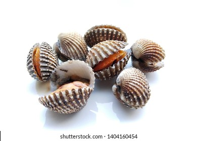 roughly cockles on white background