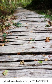 Roughly hewn board walkway leads into a wood, scattered with fallen autumn leaves - shallow depth of field