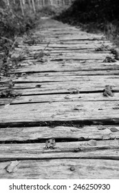 Roughly hewn board walkway leads into a wood, scattered with fallen autumn leaves - shallow depth of field - monochrome processing