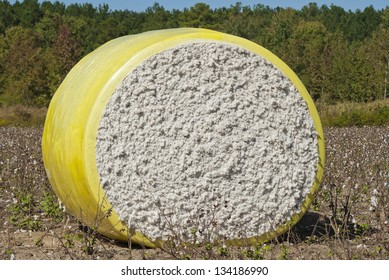 A round bale of freshly harvested cotton wrapped in plastic and waiting in the field.