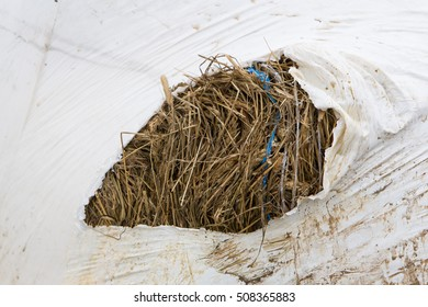 Round bale of hay wrapped in white plastic, closeup