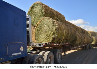 Round Bales of alfalfa hay strapped to flatbed of semi-truck for transport.