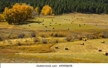 Round bales of hay dot the field on this Northern New Mexico ranch in the fall.