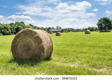 Round bales of hay freshly harvested in a field on a sunny blue sky day.