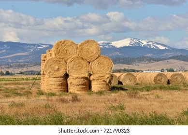 Round bales of hay stacked in a field