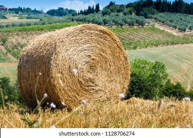 Round bales on cropped wheat near Massa Marittima in Tuscany, Italy