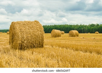 Round bales of straw lie in the field after harvesting.