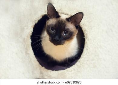 Round with cat