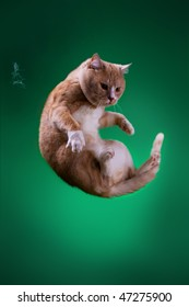 The round Cat is flying on green background