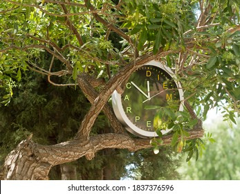 Round clock with letters CARPE DIEM on its face hanging on tree branch among green leaves. Translation of Latin words: Seize the day