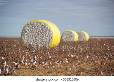Cotton Bale Images Stock Photos Vectors Shutterstock - Bales