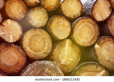 Round cut tree trunks with bark lying on pile.