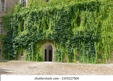 round doorway of wolfsburg castle in a wall overgrown with ivy