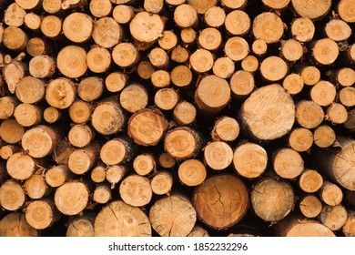 Round ends of trees stacked in a pile