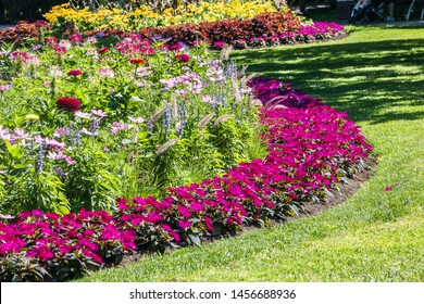 Round flower bed with a variety of plants.