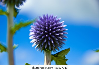 Round flower and blue sky and white cloud