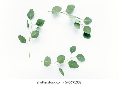 Round frame with branches eucalyptus and leaves isolated on white background. lay flat, top view