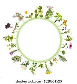 Rundrahmen mit vielen verschiedenen medizinischen Pflanzen