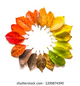 Round gradient of multicolored fall leaves. Autumn frame