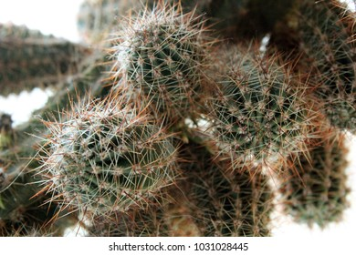 round green growing prickly house plant cactus
