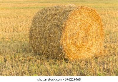 Round Hay Bale, Croatia, Slavonia region