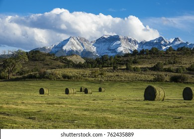 Round hay bales in a field beneath  snowy mountains near the Dallas divide, Colorado