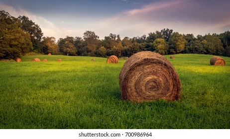 Round hay bales in a grassy meadow on a summer evening